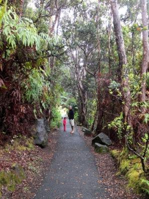 Forêt tropicale sur les flans du volcan