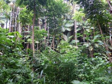 Côte est: la forêt vierge